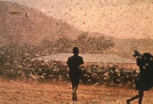 1270569659_locusts