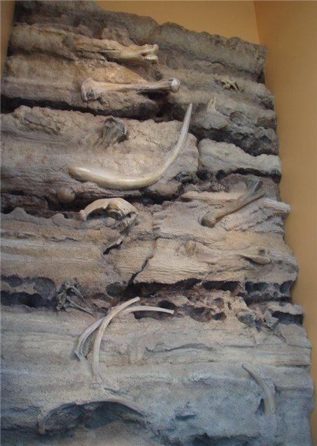 Стратиграфический разрез одного из плейстоценовых местонахождений Запада США. Хорошо видны слои осадочных пород с сохранившимися в них ископаемыми костями крупных млекопитающих.